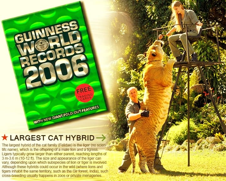 China York with Hercules the liger in Guinness Book of World Records 2006.