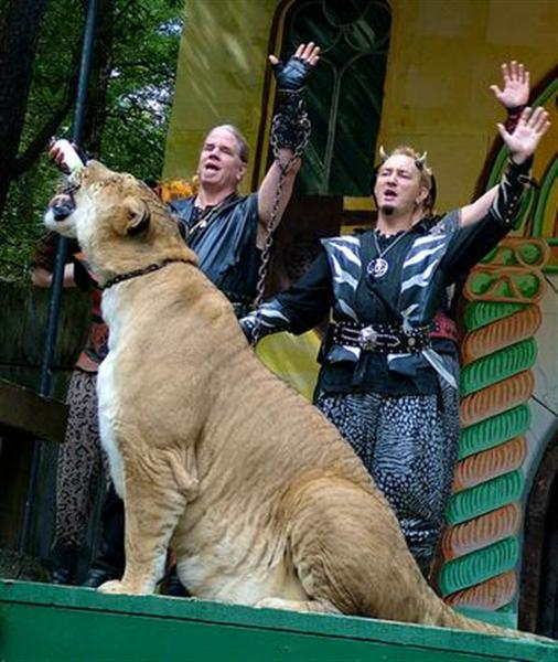 Liger Hercules Master Bhagavan Antle is very proud of Hercules the liger for its records.