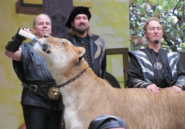 Liger Hercules appears at Tales of the Tiger event at King Richards Faire.