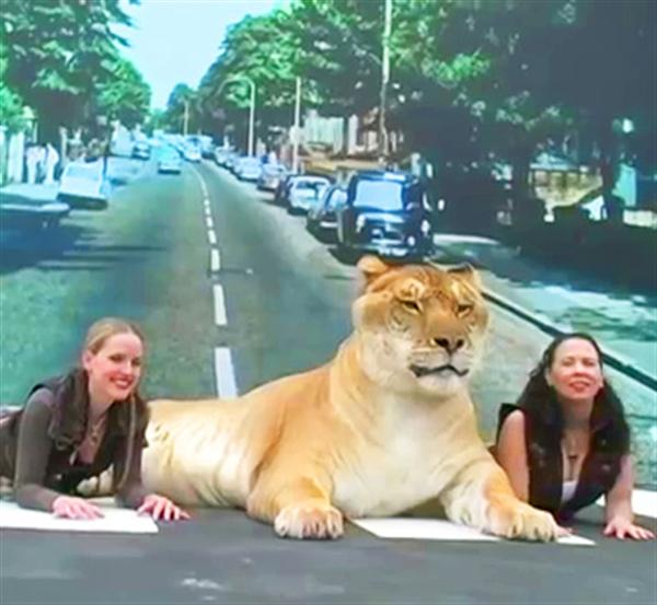 Liger Hercules visited Abbey Road in London.