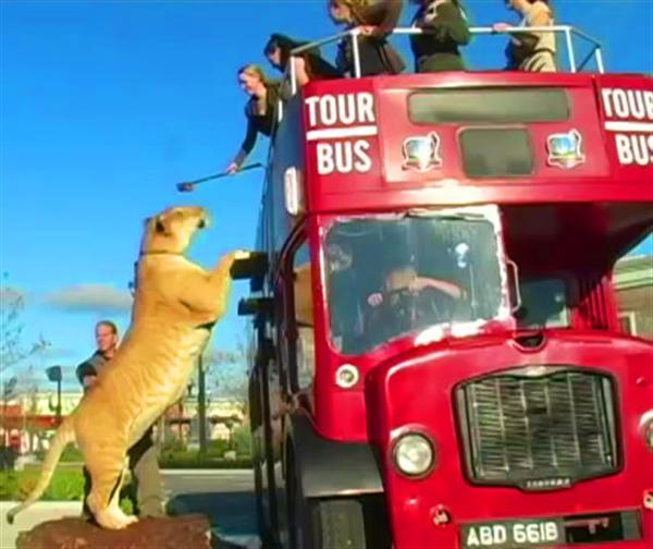 Liger Hercules with Moksha Bybee at London Double Decker Bus.