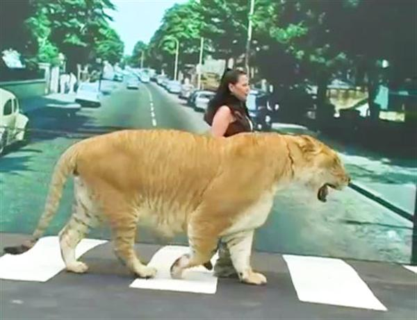 Liger Hercules at London Abbey Road along with Rajani Ferrante.