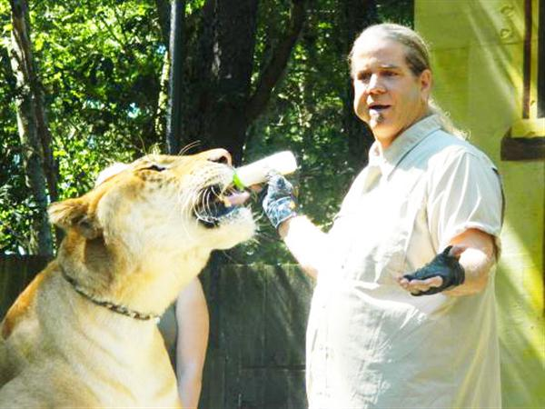Liger Hercules travels with Dr. Bhagavan Antle.
