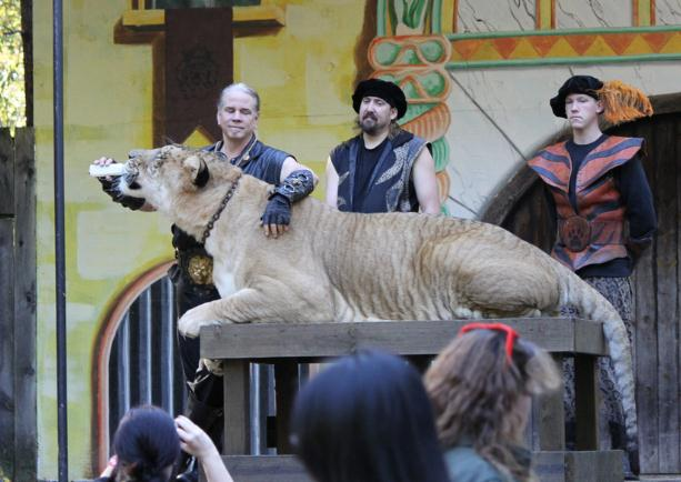 Liger Hercules travels to Massachusetts for a participation at King Richards Faire Event.